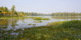 Journey through the backwaters of Kerela Stock Image