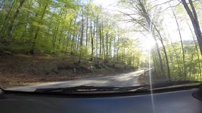 Journey with car through the forest. At curved road. Sun flares coming through the trees stock video footage