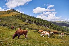 Journey on foot through the mountain valleys. The beauty of wildlife. Altai, the road to Shavlinsky lakes. Hike.  Stock Photo