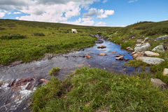 Journey on foot through the mountain valleys. The beauty of wildlife. Altai, the road to Shavlinsky lakes. Hike.  Stock Photos