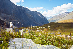 Journey on foot through the mountain valleys. Beauty of wildlife. Altai, the road to Shavlinsky lakes, Russia. Peaks of snowy. Mountains of Siberia. Hiking in Stock Images