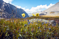 Journey on foot through the mountain valleys. Beauty of wildlife. Altai, the road to Shavlinsky lakes, Russia. Peaks of snowy Stock Photos