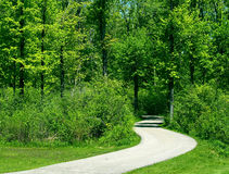 Journey Forward. Curved pathway leads deep into the forest Royalty Free Stock Images