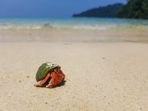 The journey of Hermit Crab. Stock Images