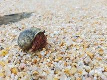 The journey of Hermit Crab. Stock Photos