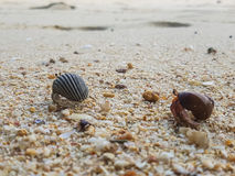 The journey of Hermit Crab. Royalty Free Stock Photo