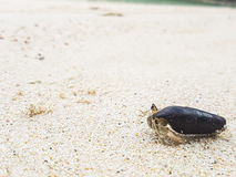 The journey of Hermit Crab. Royalty Free Stock Photography