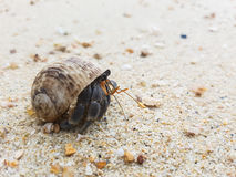 The journey of Hermit Crab. Stock Image
