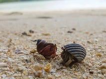 The journey of Hermit Crab. Stock Photo