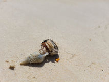 The journey of Hermit Crab. Royalty Free Stock Photos