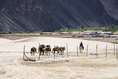 Journey in Himalayas. Tribesman uses horses to carry things for journey in Himalayas Stock Photos