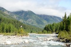 River in the mountains of the eastern Sayan Royalty Free Stock Photos