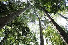 The Journey in the Rainforest Royalty Free Stock Photography
