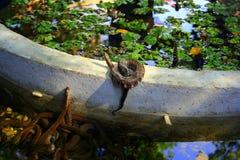 Journey to Asia: snakes Royalty Free Stock Photo