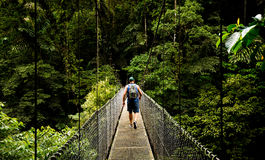 Journey to the jungle. Man on a hanging bridge walking towards the forest in Costa Rica royalty free stock photos