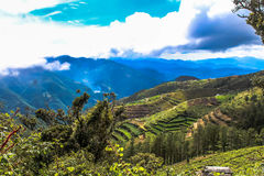 A Journey to the Rice Terraces. It& x27;s better to see something once, than to hear about it a thousand times Stock Photos