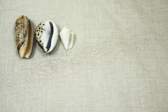 Journey to the sea. Travel by sea always collect shells on the memory of the place Stock Images