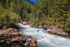 Coniferous forests and the valley of the mountain river Bashkaus royalty free stock image