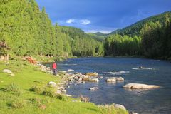 Journey through the wild nature of the Altai. Coniferous forests and the valley royalty free stock images