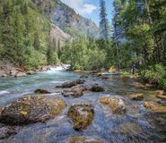 Journey through the wild nature of the Altai. royalty free stock image