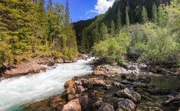 Journey through the wild nature of the Altai. royalty free stock photography