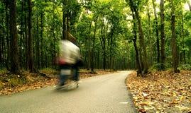 Journey through the woods Stock Photo