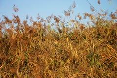 Jours d'automne Photo stock