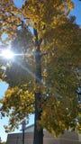 Jours d'automne Image stock