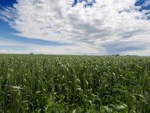 Jours de ferme de cieux bleus : Image libre de droits