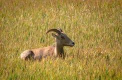 Jours de prairie Images stock