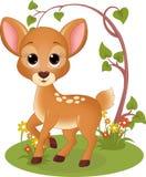 Jovem corça na floresta Fotos de Stock