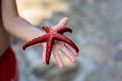 Jovem criança, guardando estrelas do mar vermelhas em suas mãos na praia Imagens de Stock