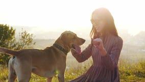 Jovem mulher adorável que joga com o cão na natureza durante o por do sol de surpresa vídeos de arquivo