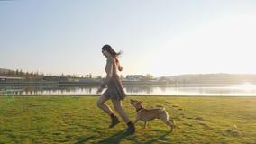Jovem mulher adorável que joga o corredor com seu cão bonito na natureza perto do lago vídeos de arquivo