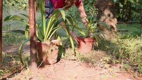 A jovem mulher arranja potenciômetros de flor no jardim doméstico, close-up vídeos de arquivo