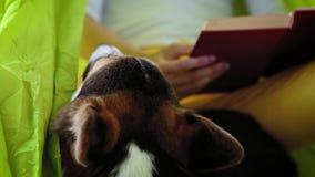 Jovem mulher atrativa com o cão bonito do Corgi de Galês que encontra-se na rede verde-clara no parque e que lê um livro vídeos de arquivo
