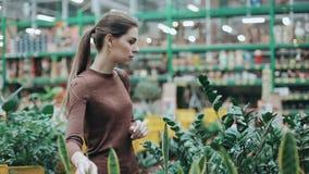 Jovem mulher bonita que escolhe dentro a loja uma planta para seu apartamento Abrigue o departamento de plantas no supermercado,  filme