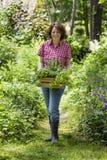 Jovem mulher com as ervas na Fotografia de Stock Royalty Free