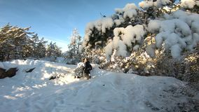Jovem mulher com a câmera profissional da foto na floresta do inverno video estoque