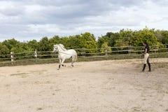 A jovem mulher de cabelo escuro fina na equitação veste o exercício de seu cavalo branco na ligação imagem de stock royalty free