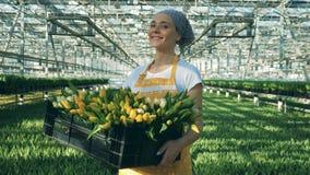 A jovem mulher de sorriso está estando no warmhouse com uma caixa das tulipas vídeos de arquivo