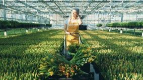 A jovem mulher de sorriso está levando tulipas de florescência filme