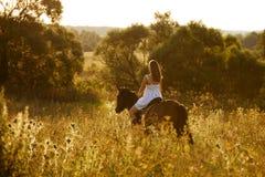 Jovem mulher em um cavalo marrom Fotos de Stock