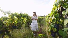 Jovem mulher entre o campo de plantas de videira com uvas video estoque