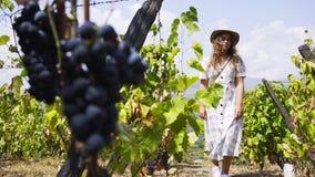 Jovem mulher entre plantas de videira com uvas filme