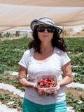A jovem mulher está em um fundo de camas verdes e mostra uma caixa com as morangos maduras vermelhas recentemente colhidas Foto de Stock
