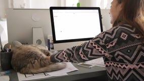 A jovem mulher está trabalhando no computador no escritório e está afagando o gato que encontra-se na tabela interna filme