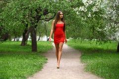 Jovem mulher feliz no vestido vermelho contra o flo da mola do fundo Foto de Stock