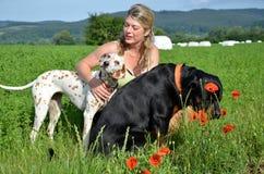 A jovem mulher levanta com seus cães grandes no prado verde Fotografia de Stock Royalty Free