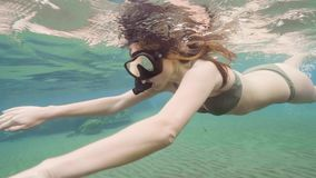 Jovem mulher na natação do roupa de banho subaquática em mergulhar a máscara e o tubo Recife de corais mergulhando e de observaçã filme